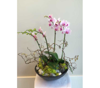 Deluxe Orchid Bowl in Victoria BC, Fine Floral Designs