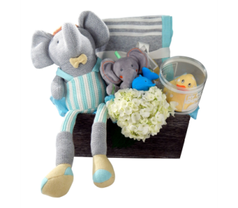 Baby Grand Gift Set- Boy   in Detroit and St. Clair Shores MI, Conner Park Florist