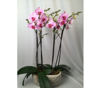 Double Orchids in Container in Bowmanville ON, Van Belle Floral Shoppes