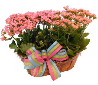 Double Kalanchoe in Little Rock AR, Tipton & Hurst, Inc.