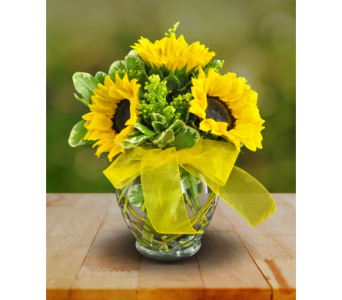Send a Ray of Sunshine in Williamsburg VA, Morrison's Flowers & Gifts