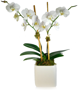 Orchid Plant in Little Rock AR, Tipton & Hurst, Inc.