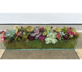 Modern Succulent garden in Bellevue WA, CITY FLOWERS, INC.