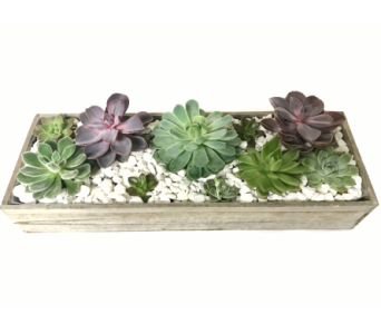 Succulent Box in Clearwater FL, Hassell Florist