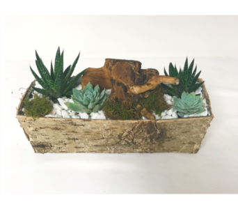 Double Succulent Box in Clearwater FL, Hassell Florist