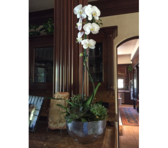 White Cascading Orchid With Succulents in Woodland Hills CA, Abbey's Flower Garden