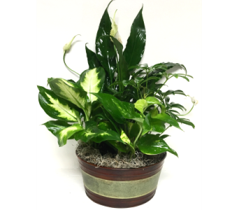 Round Green/Brown Metal Planter- 3 sizes available in Wyoming MI, Wyoming Stuyvesant Floral