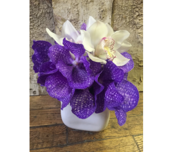 Orchid Dazzle in Houston TX, River Oaks Flower House, Inc.
