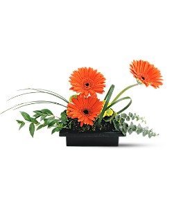 Teleflora's Zen Gerbera Bowl in Palm Coast FL, Blooming Flowers & Gifts
