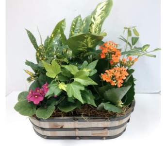 Mixed Planter in Timmins ON, Timmins Flower Shop Inc.