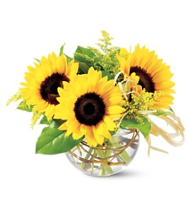 Teleflora's Sassy Sunflowers in Modesto, Riverbank & Salida CA, Rose Garden Florist