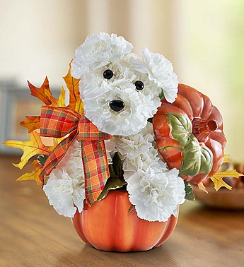 Dog-able for Fall in Round Rock TX, Heart & Home Flowers