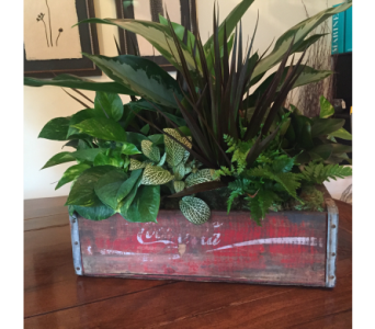 Coca-Cola Soda Crate Planter in Dunwoody GA, Blooms of Dunwoody