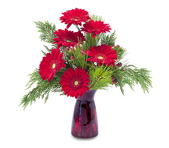 Winter Gerbera in Helena MT, Knox Flowers & Gifts, LLC