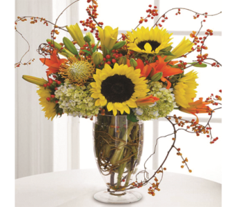 Autumn Sun in Indianapolis IN, George Thomas Florist