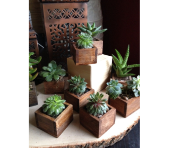 succulent in rustic box in Bismarck ND, Dutch Mill Florist, Inc.