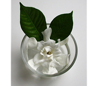 Gardenia in a Fish Bowl in Columbus OH, OSUFLOWERS .COM