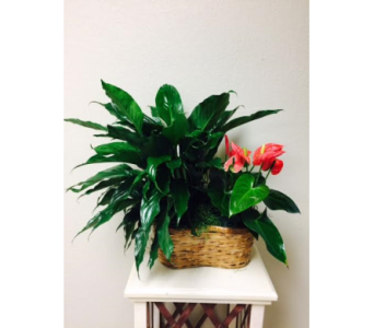 Spath/Anthurium Combo in Clearwater FL, Hassell Florist