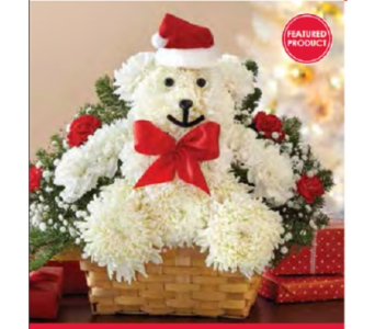 Very Merry Beary in Fairfax VA, Exotica Florist, Inc.