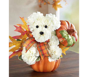 A Dogable for Fall in Fairfax VA, Exotica Florist, Inc.