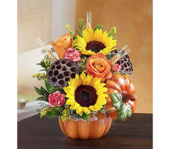 Pumpkin and Posies in Fairfax VA, Exotica Florist, Inc.