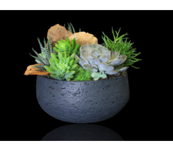 Oasis Succulent Bowl in Boston MA, Stapleton Floral