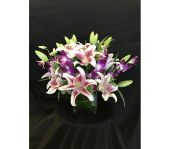 Fragrant Star with Orchids Cube - *New Item* in Dallas TX, Z's Florist