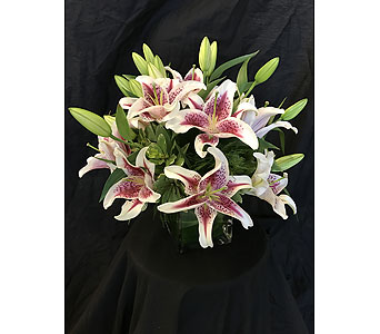 Fragrant Star Cube - *New Item* in Dallas TX, Z's Florist