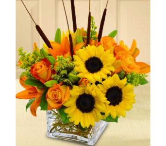 FALL FUSION in Needham MA, Needham Florist
