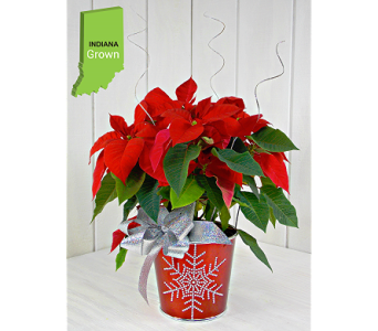 Sparkly Snowflake Red Poinsettia in Indianapolis IN, Steve's Flowers and Gifts