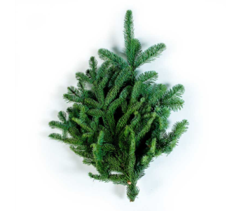 Fresh Douglas Fir Bunch in Little Rock AR, Tipton & Hurst, Inc.