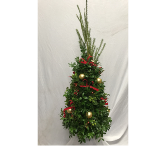 Boxwood Christmas Tree in Columbus MS, Noweta's Green Thumb
