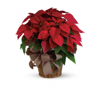 Large Poinsettia in Basket  in Muskegon MI, Wasserman's Flower Shop