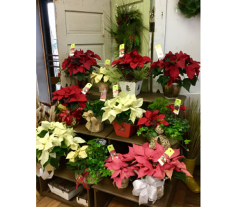 Store Tour in Northfield MN, Forget-Me-Not Florist