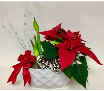 Amaryllis and Poinsettia in White Ceramic in Wyoming MI, Wyoming Stuyvesant Floral