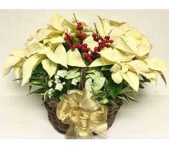 Large White Poinsettia Planter Basket in Wyoming MI, Wyoming Stuyvesant Floral