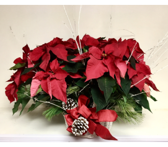 Large Red Poinsettia Basket in Wyoming MI, Wyoming Stuyvesant Floral