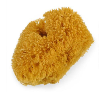 Full Body Sea Sponge in Reno NV, Bumblebee Blooms Flower Boutique