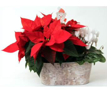 Duet Planter - Small in Grimsby ON, Cole's Florist Inc.
