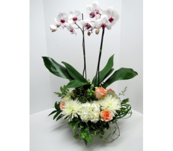 Regal Opulence in Traverse City MI, Teboe Florist