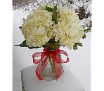 Frosty Hydrangeas in Skowhegan ME, Boynton's Greenhouses, Inc.