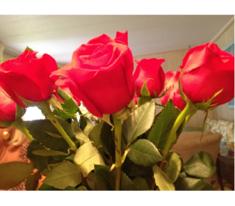 18 Roses with Chocolates in Brecksville OH, Brecksville Florist