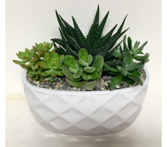 Succulent Serenity - Ceramic Planter in Wyoming MI, Wyoming Stuyvesant Floral
