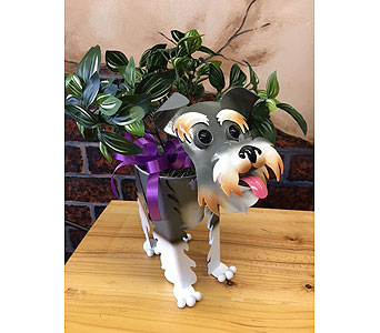 Schnauzer in Derby KS, Mary's Unique Floral & Gift