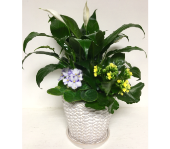 Weave Pattern Ceramic Planter-2 Sizes Available in Wyoming MI, Wyoming Stuyvesant Floral