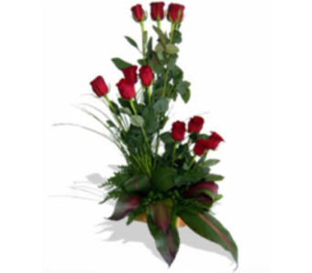 Thinking of You in San Antonio TX, Xpressions Florist