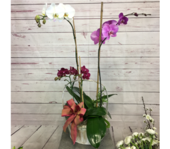 Orchid Trio in Wellington FL, Wellington Florist