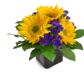 Gerbera Daisy Delight in Nashville TN, Emma's Flowers & Gifts, Inc.