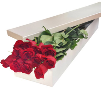 Dozen Roses Boxed in Burlington ON, Appleby Family Florist
