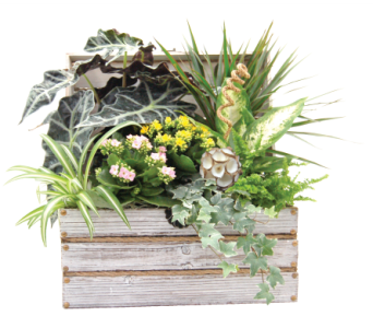 Worthing Chest Garden in Detroit and St. Clair Shores MI, Conner Park Florist